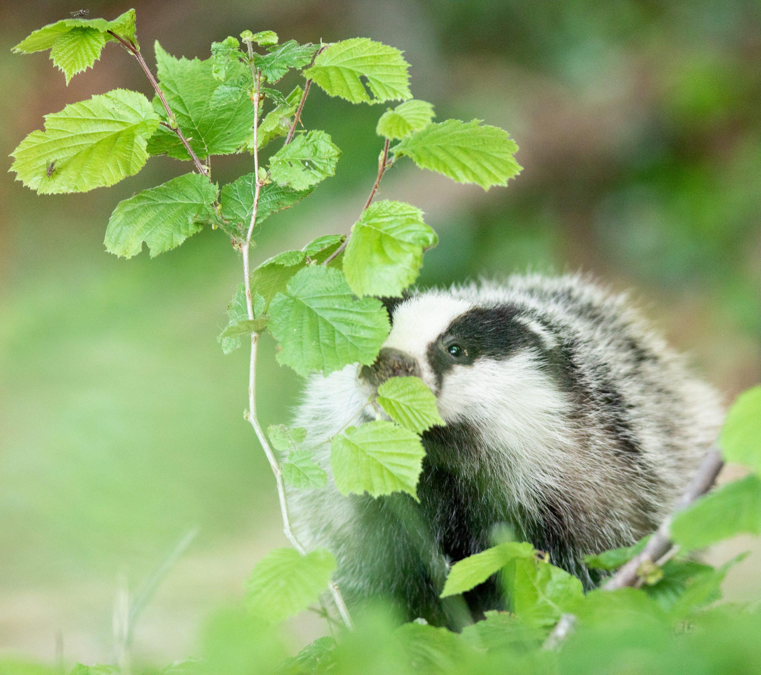 La Nature amoureuse, faune de nos régions